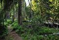 Chodníček veporským pralesom