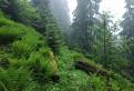 Šiprúňsky prales