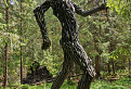 vládca lesa / 1.0000
