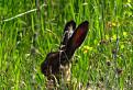 uši v tráve