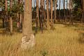 Zahorske lesy