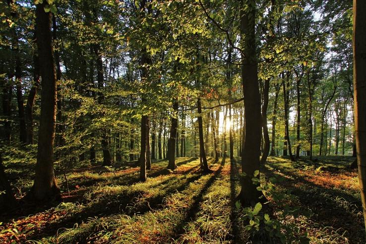 karpatským lesom I