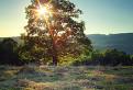 Slnko v korune