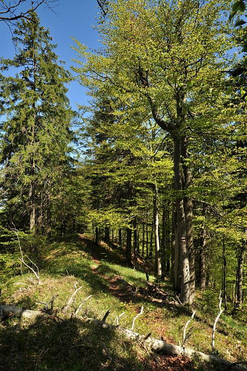 Fatranským pralesom