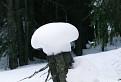 Snehový hríbik