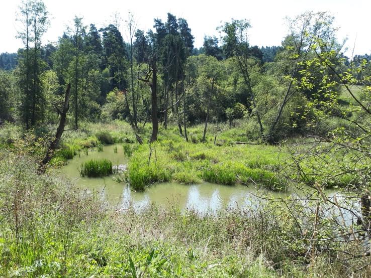 Bobrie jazierko na Zlatnom potoku