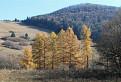 Zlaté stromy / 1.0667