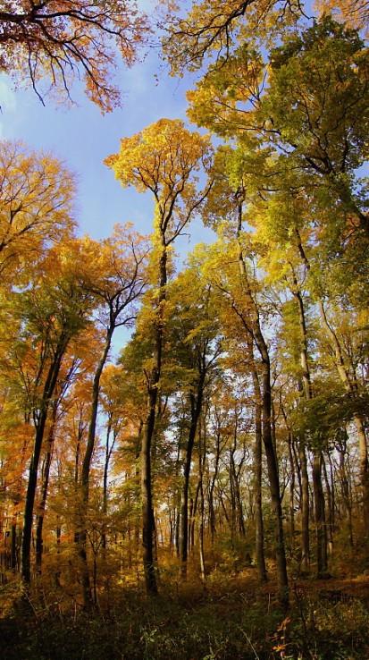 Prechádzka jesenou