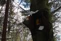 Obávaný strom pod Ostrým