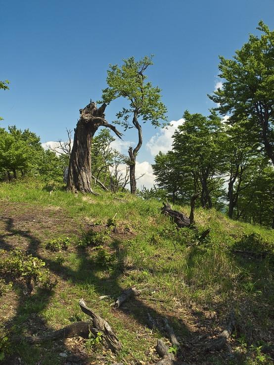 Pastier stromov