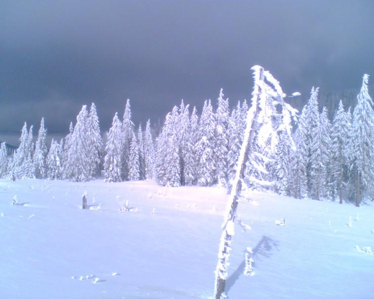 Zima na Smrekovici