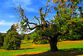 Strom starec