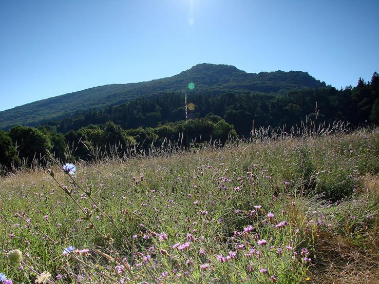 Vápenná od Sološnice