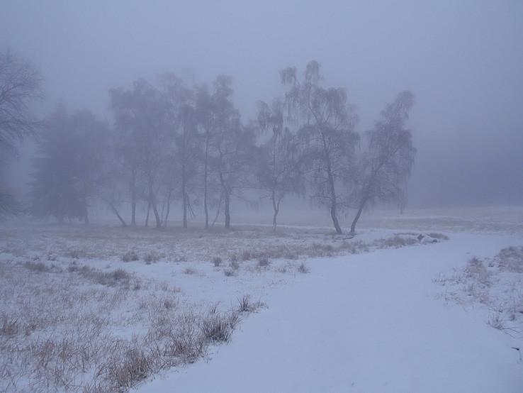 ako v sibírskej lesotundre