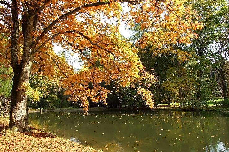 Pri rybníku
