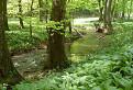 cesnakový potok