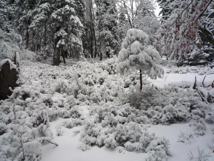 Zima na Magure