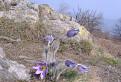Jar na Sitne