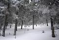 V lese pod Flochovou