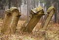 Hroby v lese