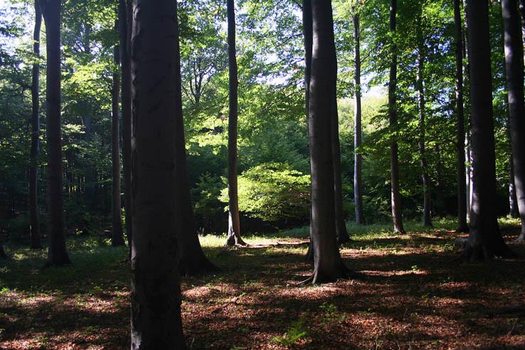 V lese pod Zárubami