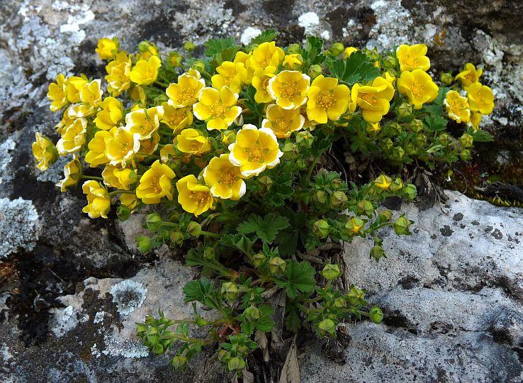 Kvitnúce skaly