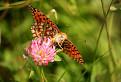 Svet motýľov na Látkach / 1.0000