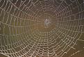 Dúhová pavučina