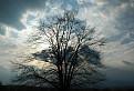strom a oblaky