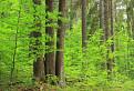 Pralesom Ľubietovského Vepra