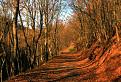 Cesta, lístie a západ slnka