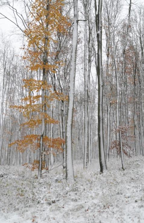 Zimojeseň