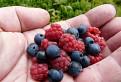 Extra veľké kúsky ovocia