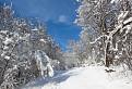 Les pod snehom VI.