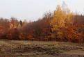 Žeravé stromy