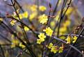 12.januára kvitne... / 0.0000