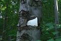Hladny strom