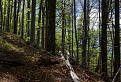 V tôni stromov