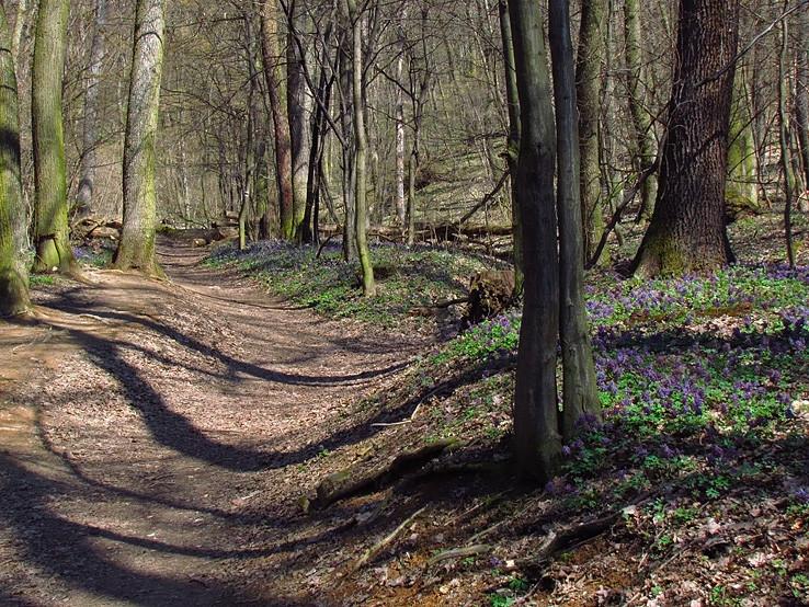 jar v lese pod Zoborom
