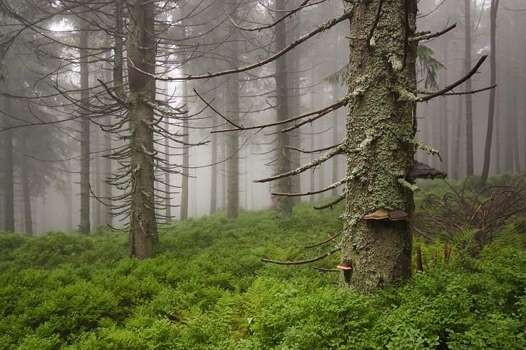 Rezerwat Przyrody Pod Rysianka
