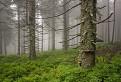 Rezerwat Przyrody Pod Rysianka / 1.0789