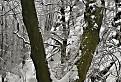 Stromy pod hrebeňom