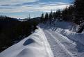 Cesta z hôr