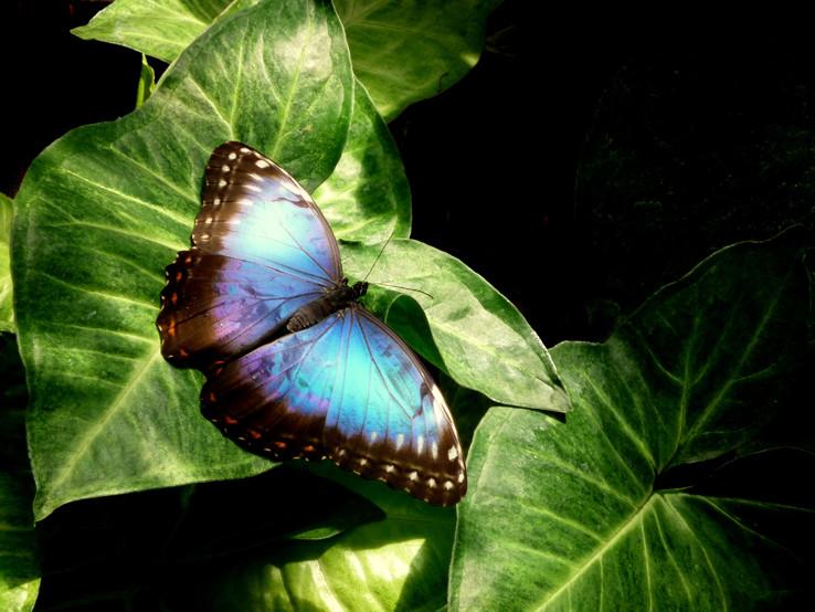 Motýľ 2