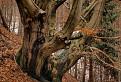 Strom tvárí lesných bytostí. / 1.0000