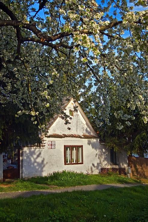 jar na Slovinci