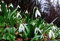 Borišovská skorá jar
