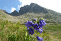 Kvety a hory II