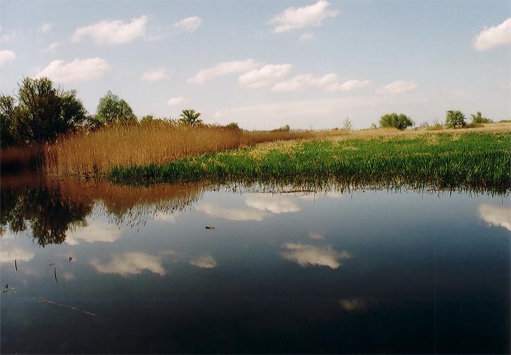 Bezleknové leknové jazero...