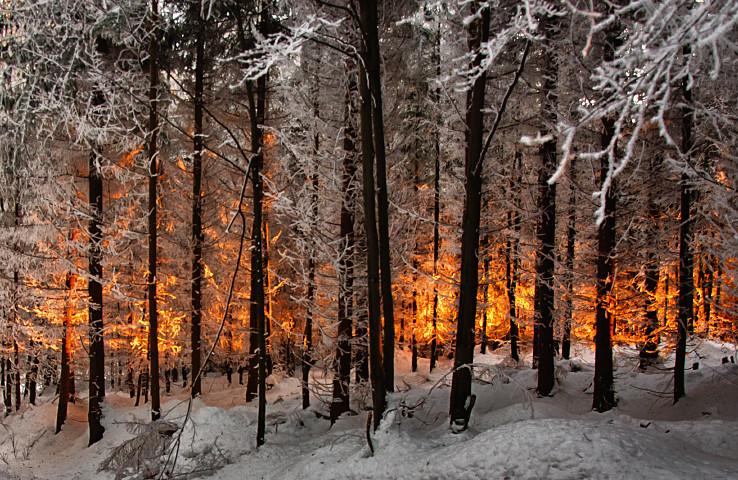 Ohnivý les